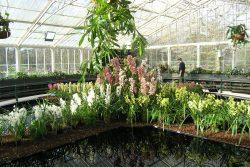 Orchids - Kew Gardens