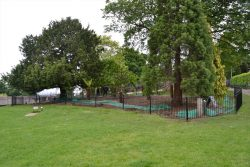 Prehistoric Garden at Horniman Museum & Gardens