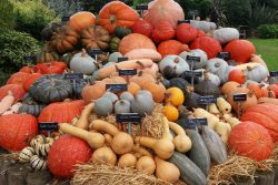 Pumpkin Display - Horniman Museum & Gardens