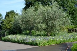 Wildflower Beds at Horniman Museum & Gardens